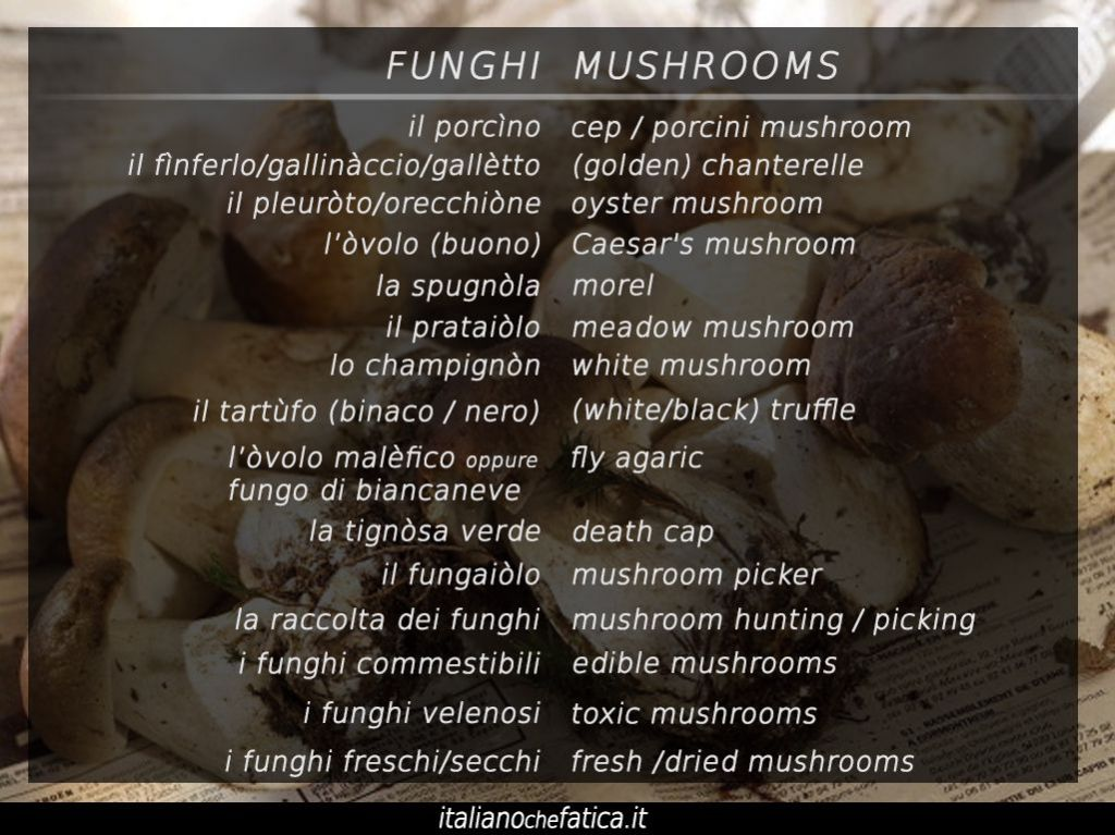 italian names of mushrooms lessico italiano mushrooms in italian for beginners_it